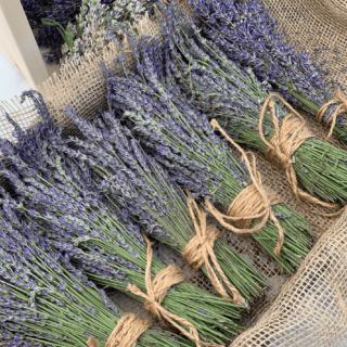 pcl-fresh-lavender